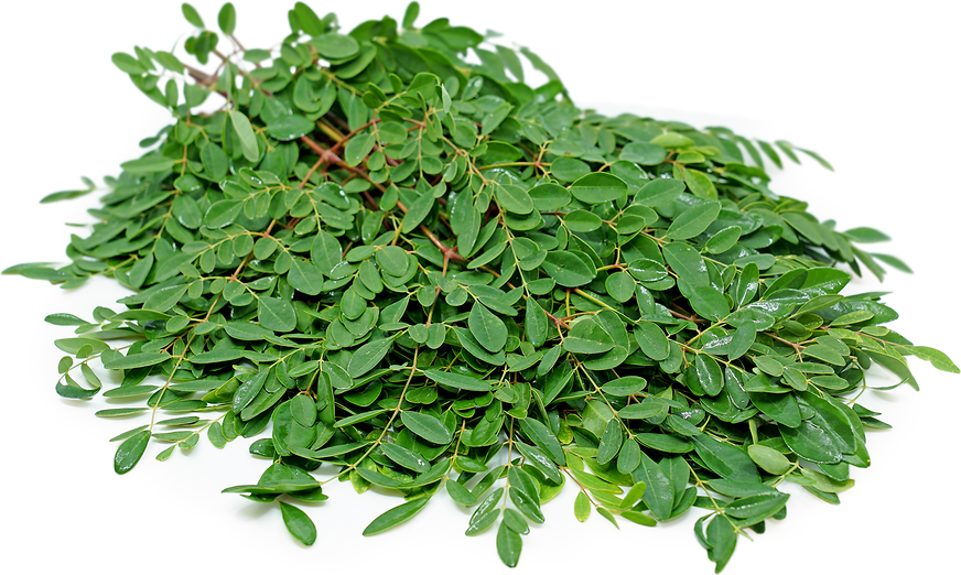 Moringa Leaves picture