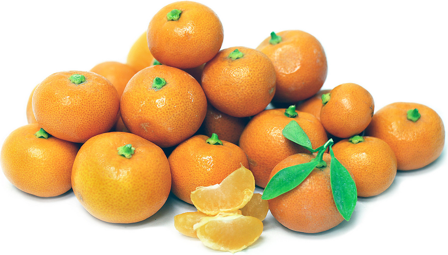 Calamondin Oranges picture