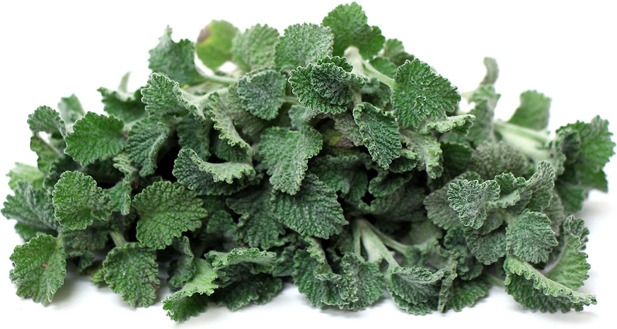 White Horehound