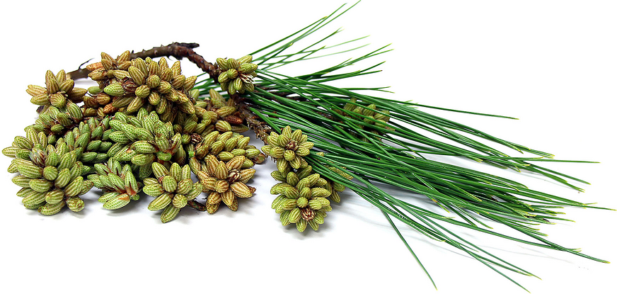 Foraged Pine Pollen Cones picture