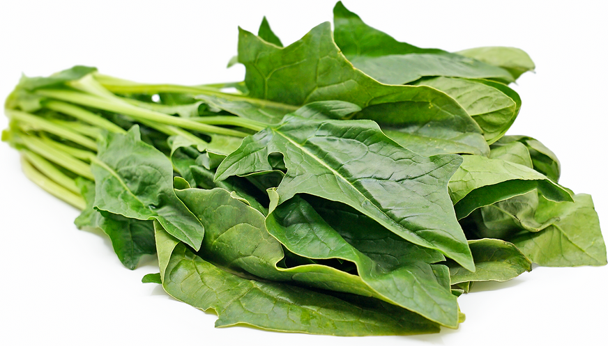 Arrowhead Spinach picture