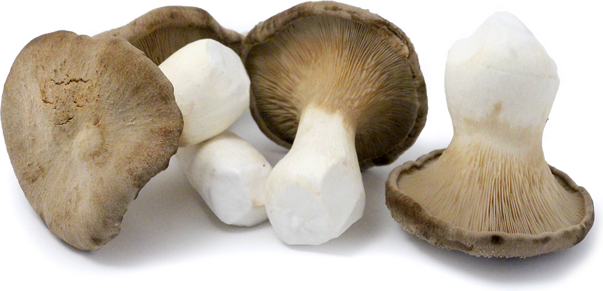 Agitake Mushrooms picture