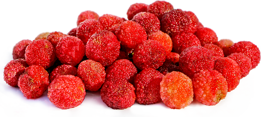 Red Bayberries picture