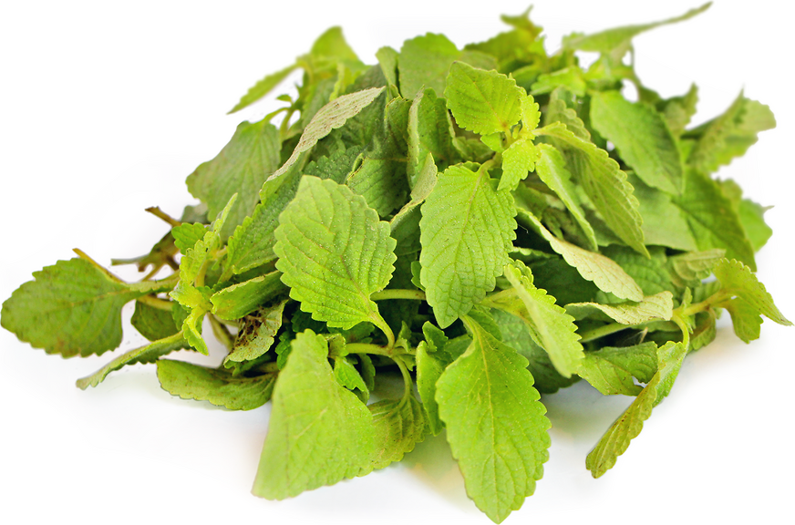 Tulsi Basil picture