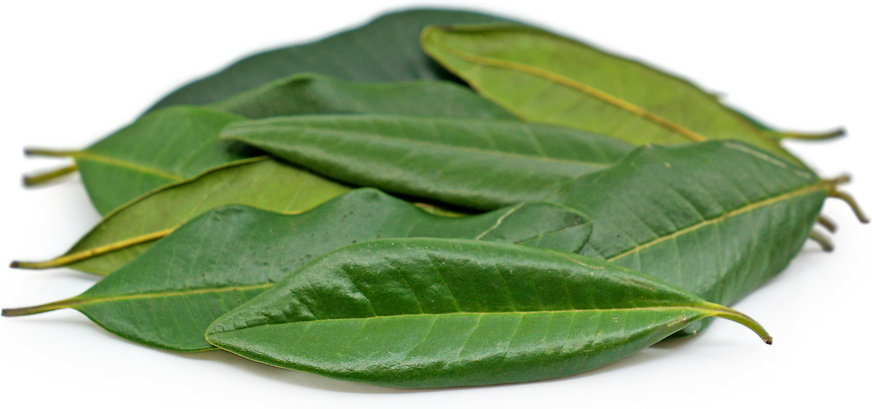 Allspice Leaves picture