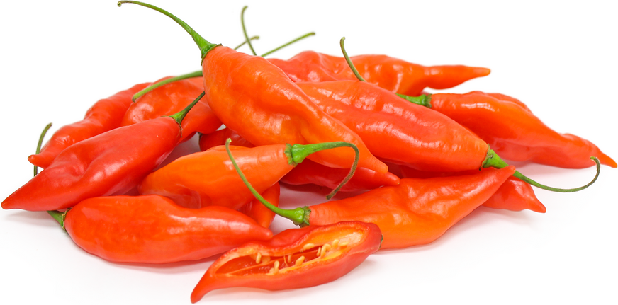 Hot Paper Lantern Chile Peppers