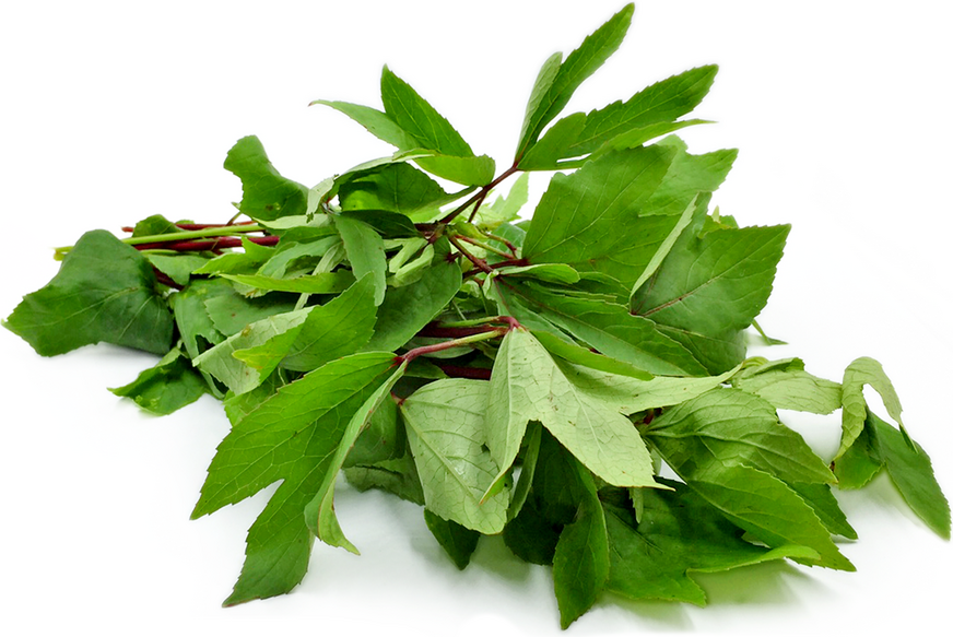 Gongura Leaves picture
