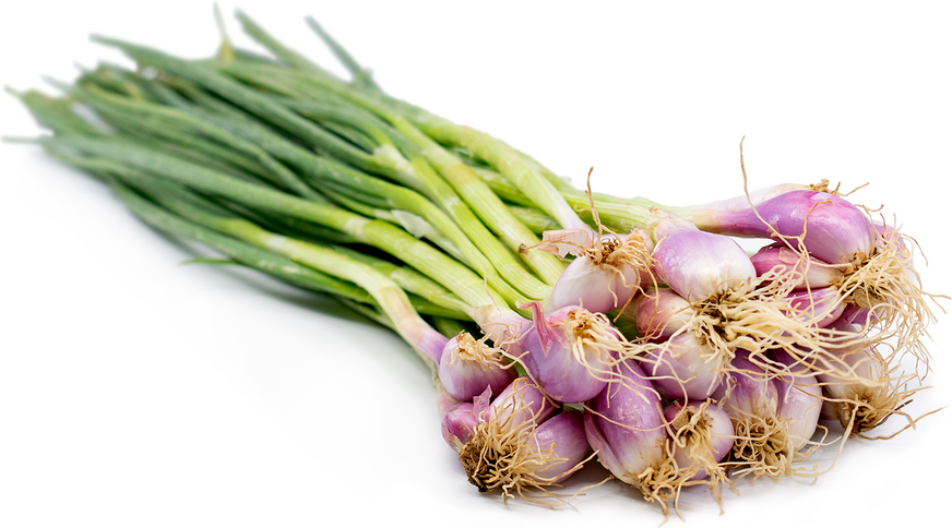 Thai Shallots picture