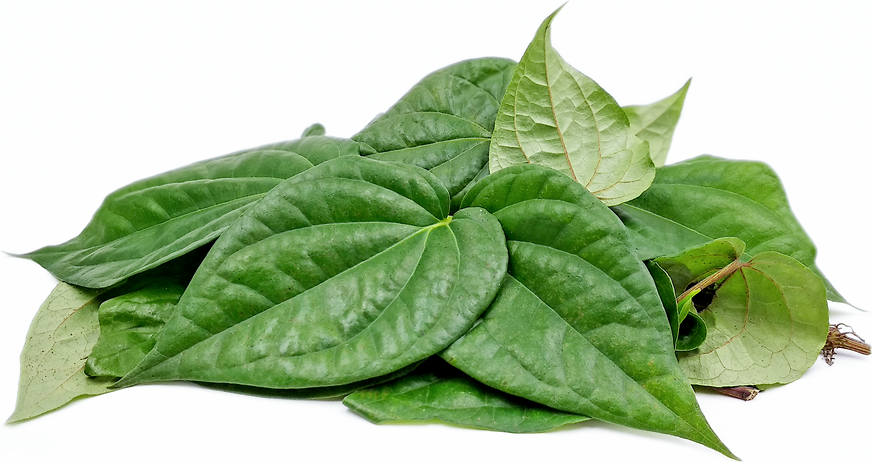 Paan Leaves picture