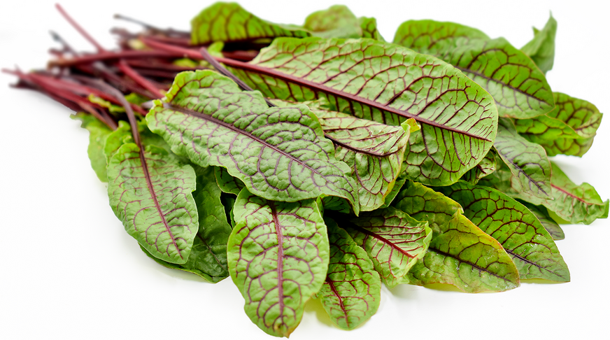 Red Sorrel picture