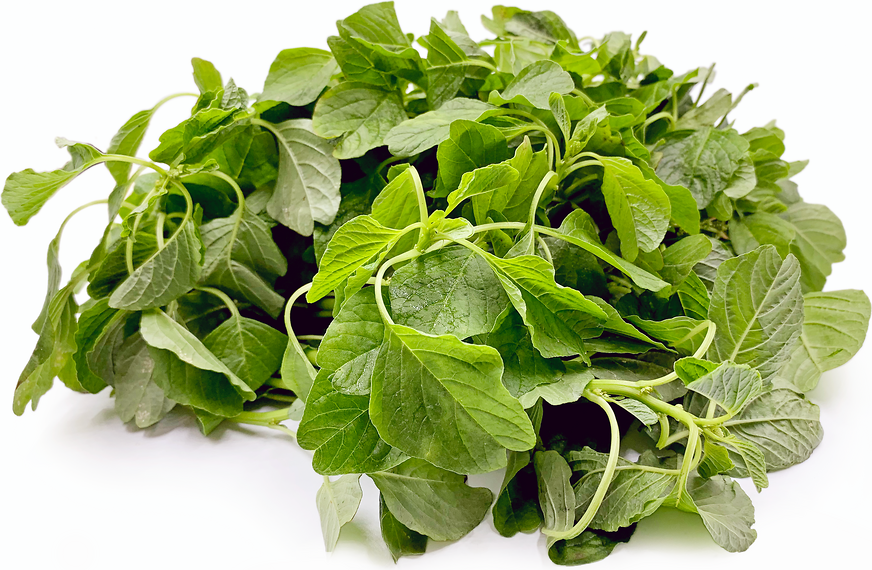 Indian Keerai Spinach picture