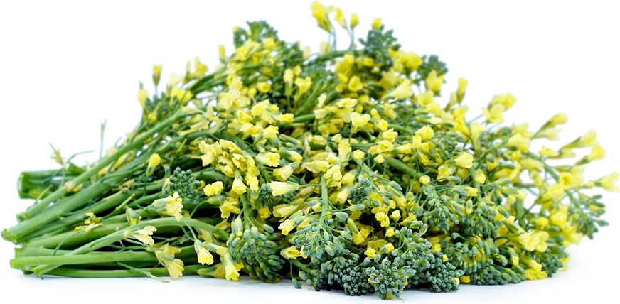 Rapini Flowers picture
