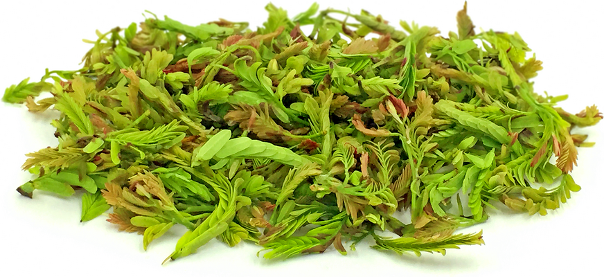 Tamarind Leaves picture