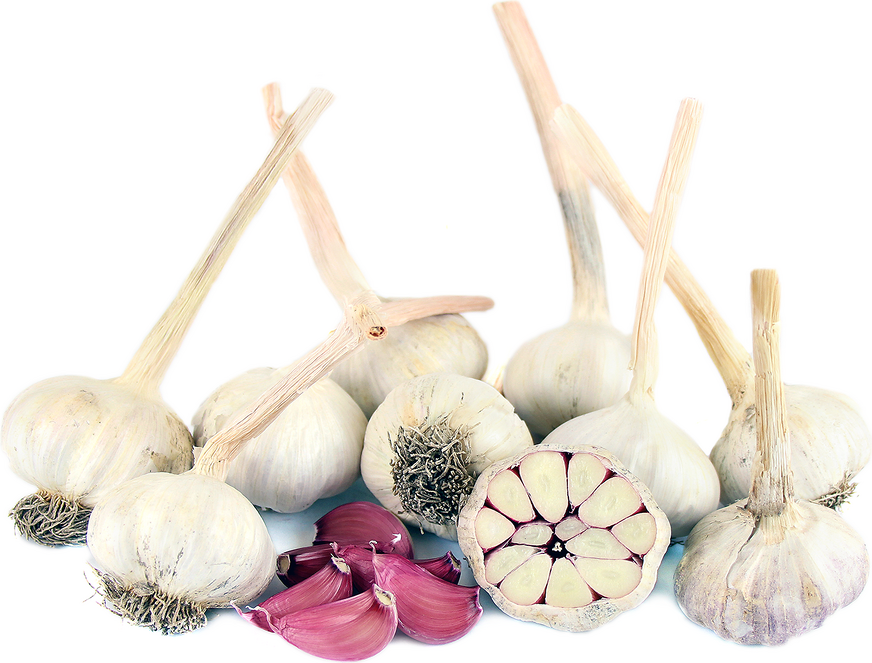 Red Sulmona Garlic picture