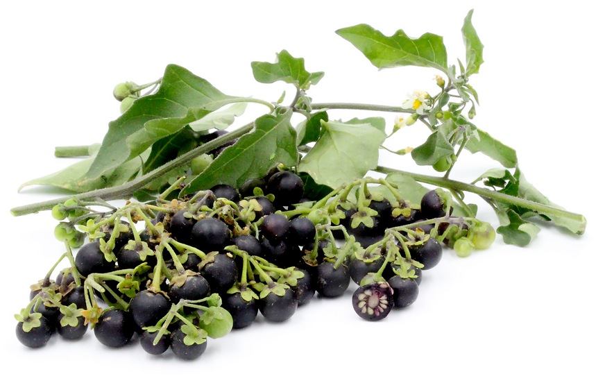 Black Nightshade Berries picture