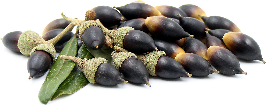 Southern Live Oak Acorns picture