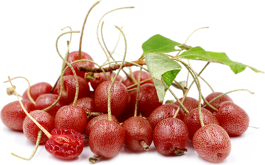 Goumi Fruit picture