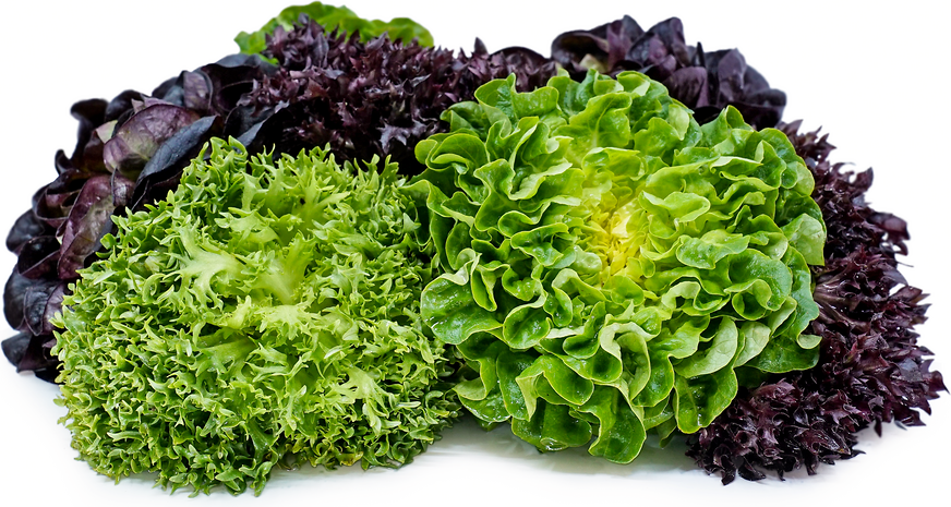 Link to Salanova® Lettuces