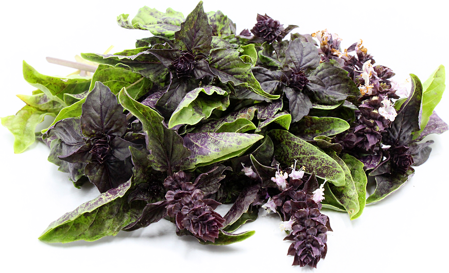 Red Lettuce Basil picture