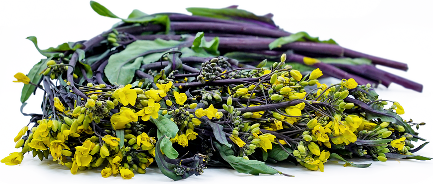 Purple Choi Sum Cabbage