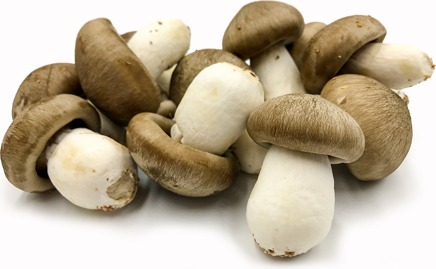 Japanese Mushrooms picture