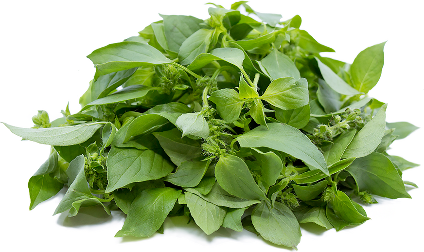 Lemon Basil picture