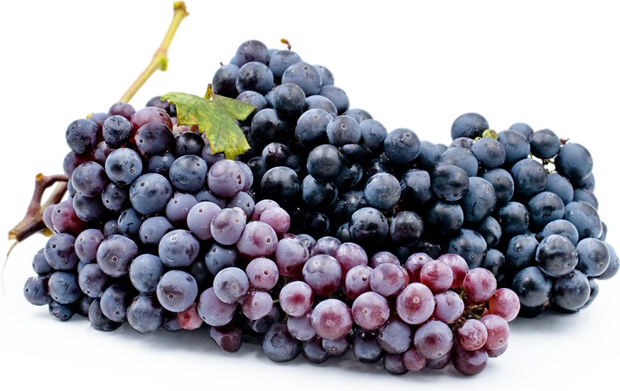 Zinfandel Grapes picture