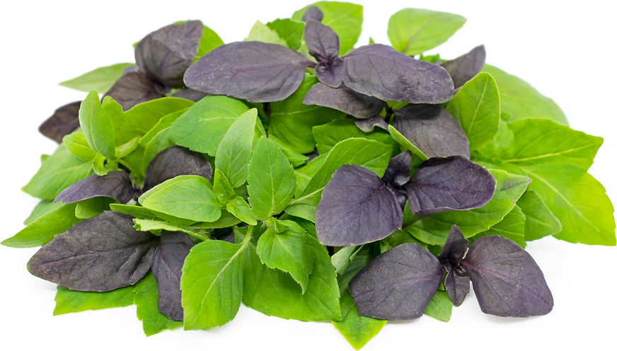 Petite Basil Mix picture