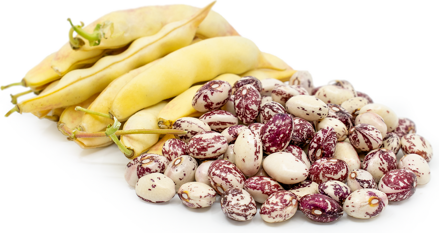 Good Mother Shelling Beans picture