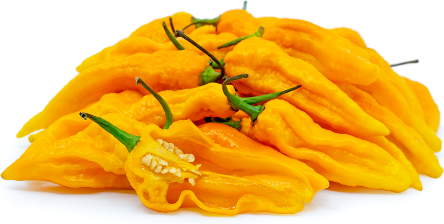 Yellow Ghost Chile Pepper