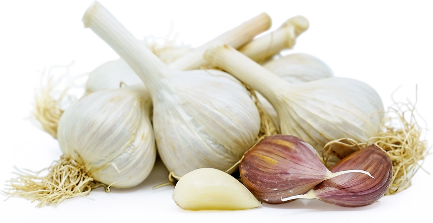 Music Garlic picture