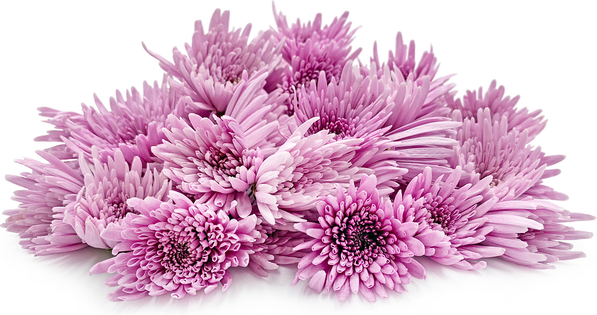 Japanese Chrysanthemums picture