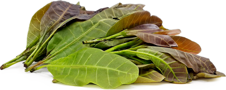 Cashew Leaves picture