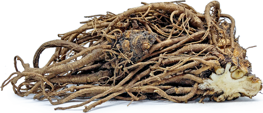 Lovage Roots picture