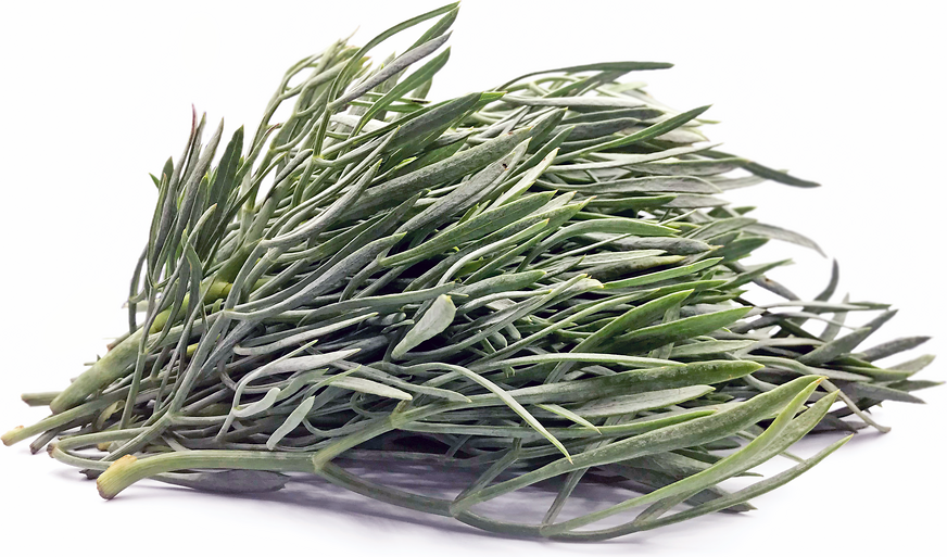 Foraged Sea Fennel picture