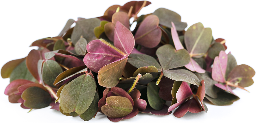 Petite® Red Meadow Sorrel picture