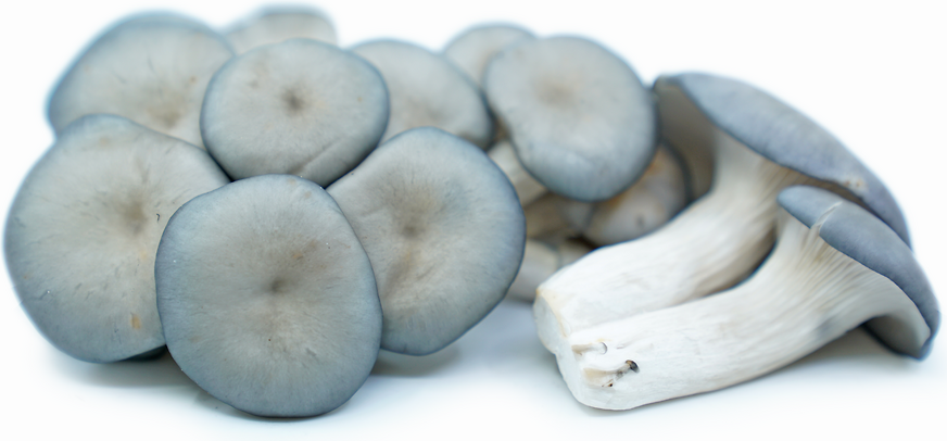 Blue Oyster Mushrooms picture