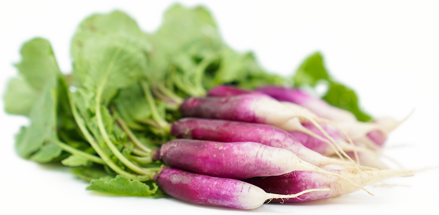 French Violet Radishes picture