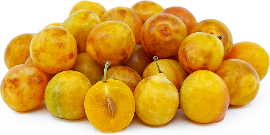 American Mirabelle Plum picture