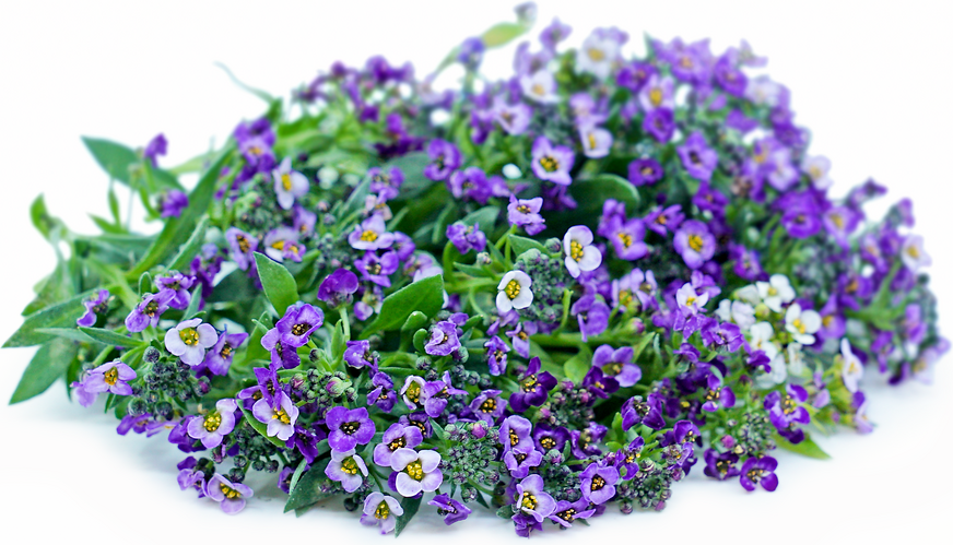 Purple Alyssum Flowers picture