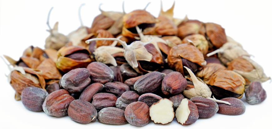 Jojoba Nuts picture