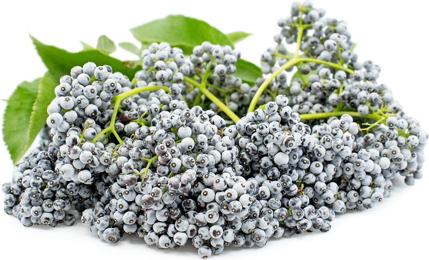 Elderberries picture
