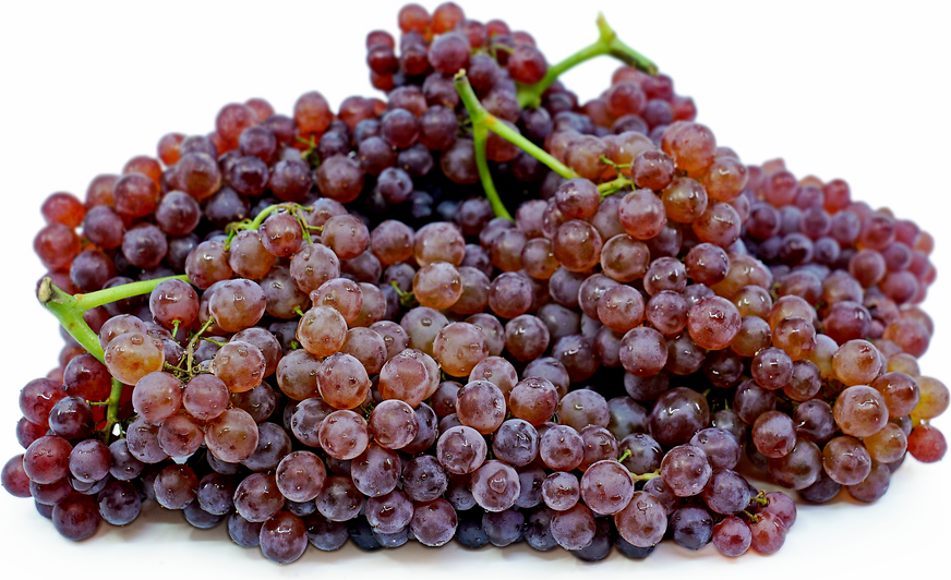 Champagne Grapes picture