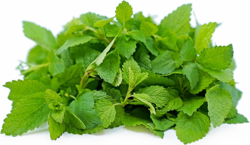 Lemon Balm picture