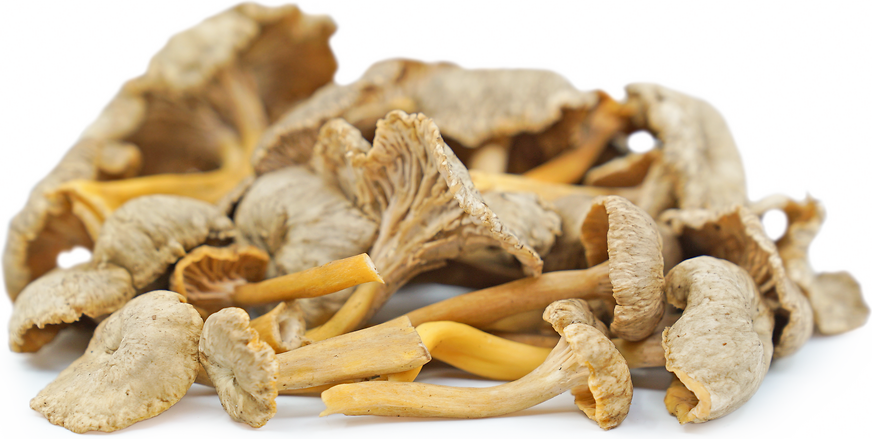 Yellow Foot Chanterelle Mushrooms picture