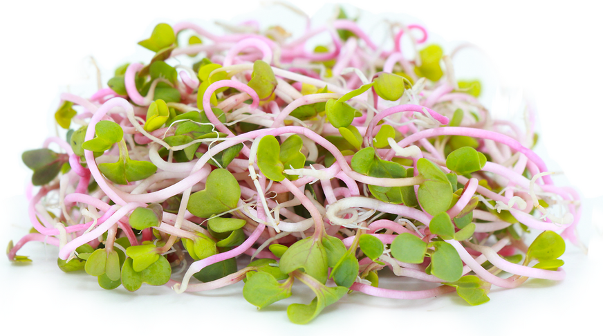 China Rose Sprouts