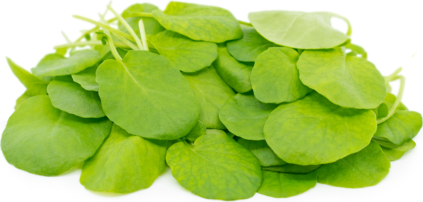 Petite® Watercress picture
