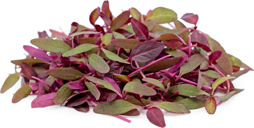 Micro Red Amaranth picture