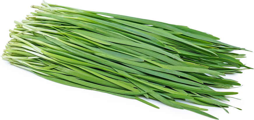 Garlic Chives picture