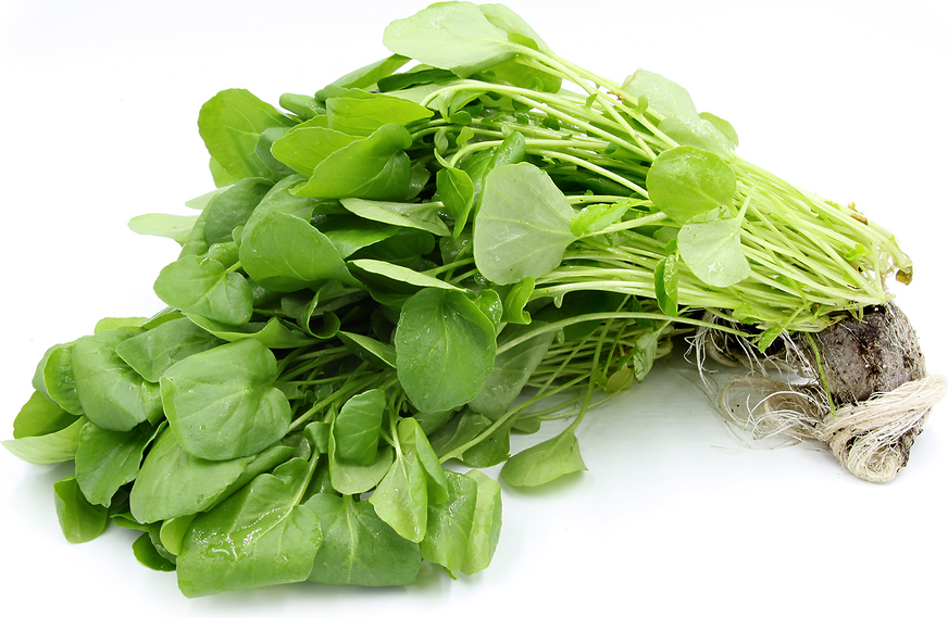 Hydro Watercress picture